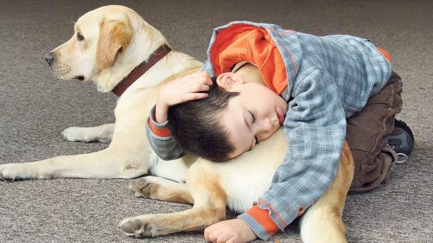 galicia estrena una terapia pionera con animales en ni u00f1os autistas