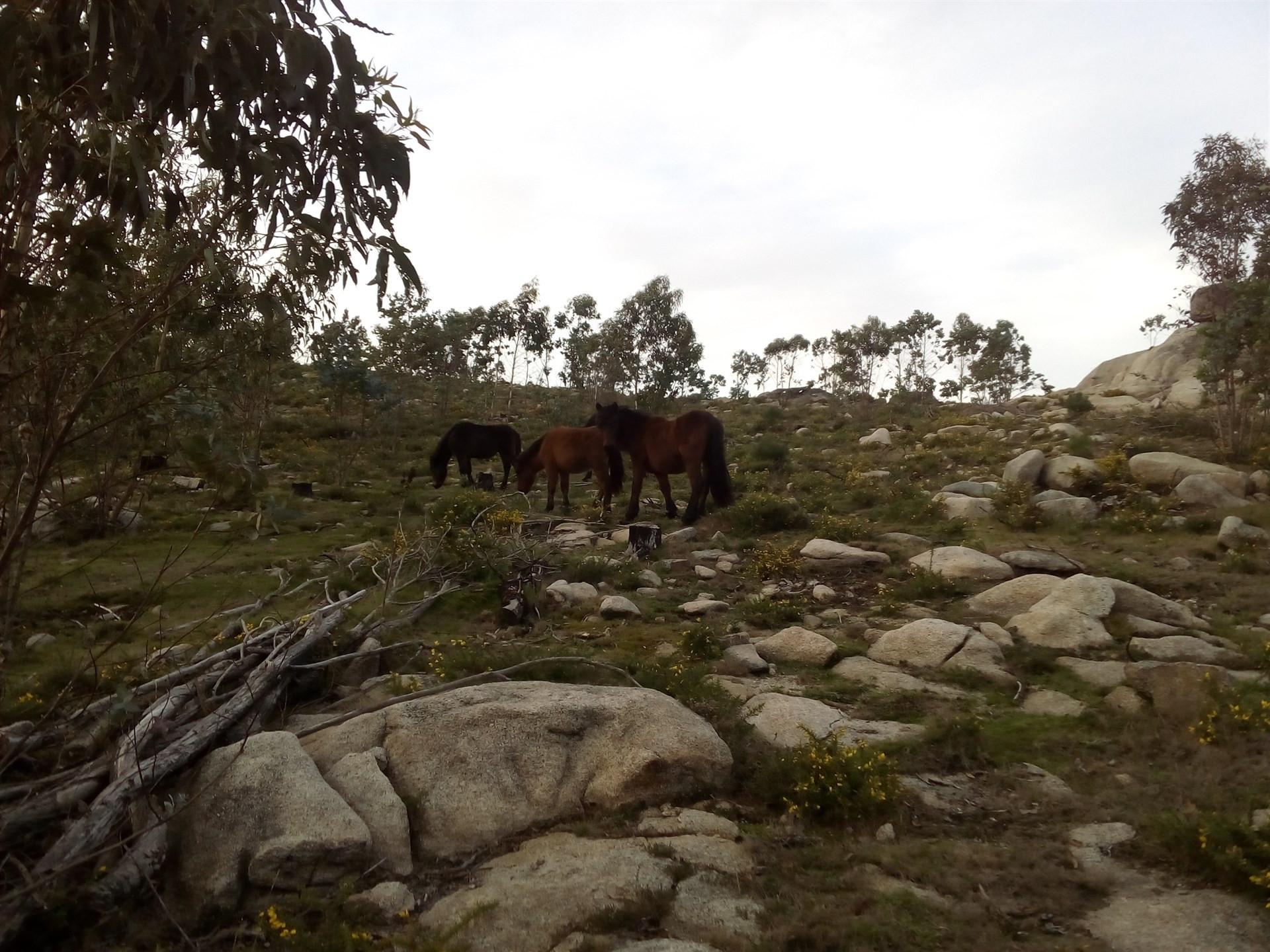 Cabaloscontrancas