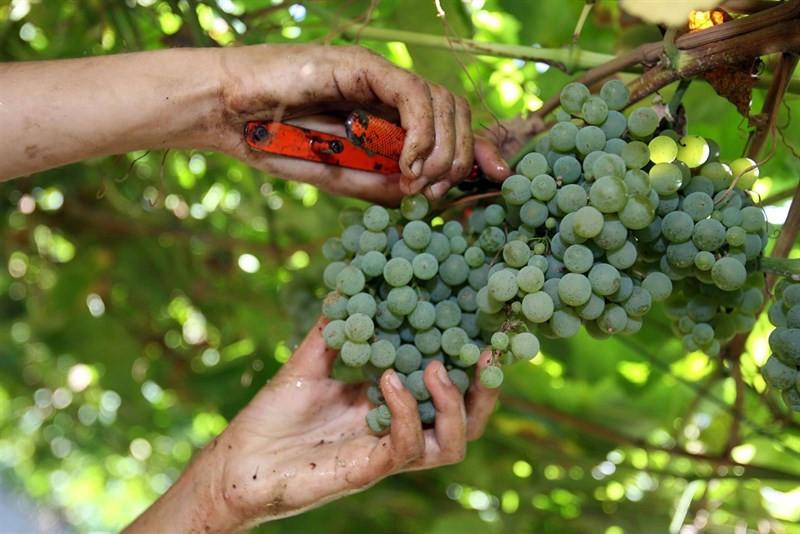 Vinoriasbaixas