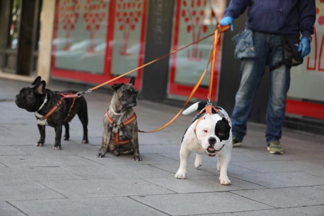 Una persona pasea a tres perros por las calles de la capital en plena pandemia del coronavirus donde con más de 1,2 millones de casos registrados en el mundo en personas, la infección solo se ha confirmado en dos perros, uno o dos gatos y una tigresa.