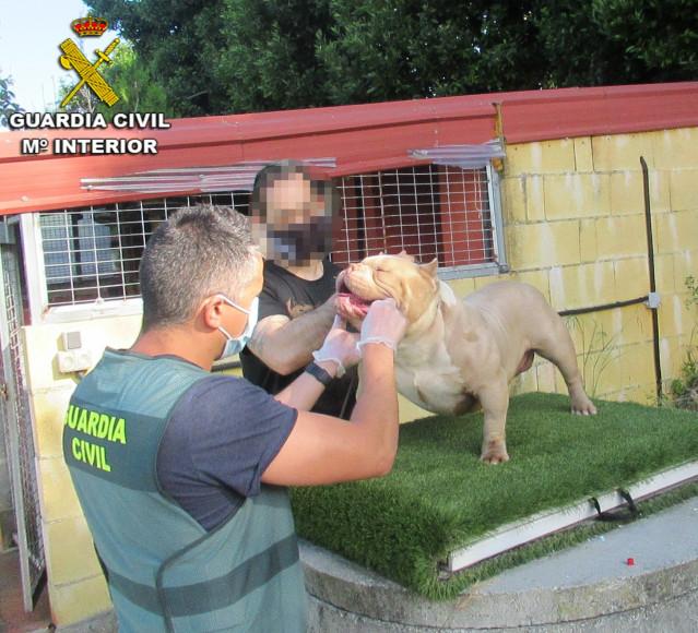 La Guardia Civil recupera en Vigo dos perros que habían sido robados en Sanxenxo (Pontevedra).